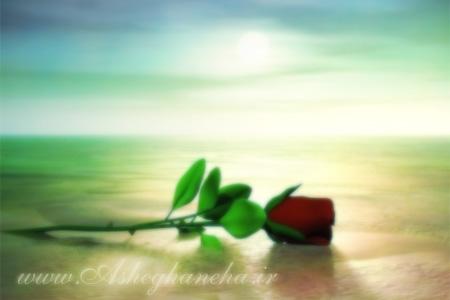 گل رز گل مادر روز مادر دسته گل