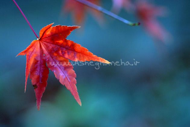 برگ پاییز خزان عشق فصل