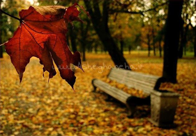 آغوش بارون رستاک سکوت پاییز