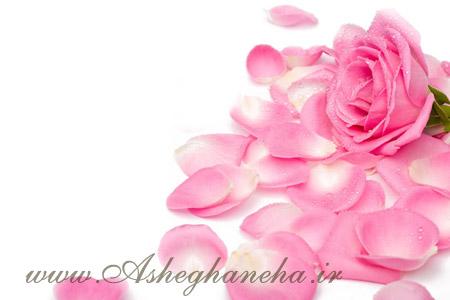 گل رز پاییز فاصله دلتنگی جدایی
