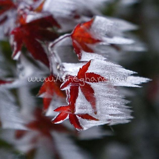 برف درخت عشق هوس پرواز