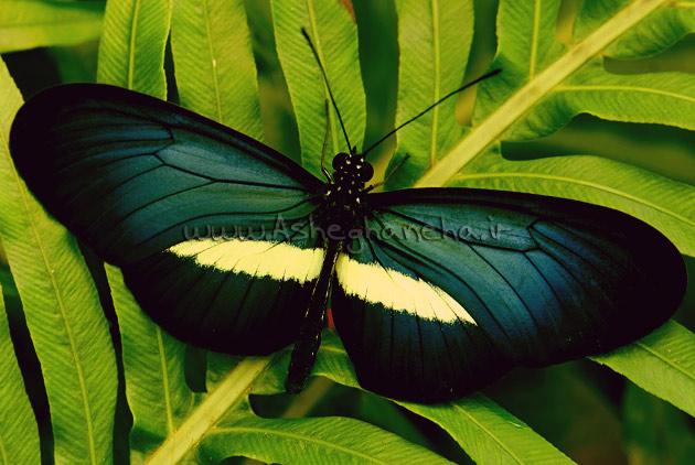 پرواز پروانه خدا زندگی مشکلات
