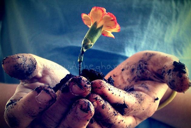 جاوید عشق مرگ مهر نهال