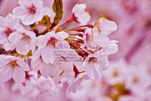 بهار سال نو عید نوروز