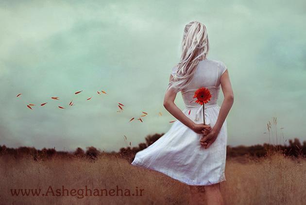 بید تنها تنهایی شقایق گل