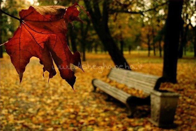 آغوش بارون پاییز رستاک سکوت